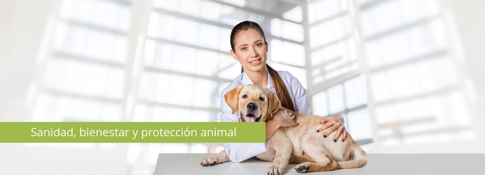 Sanidad, bienestar y protección animal